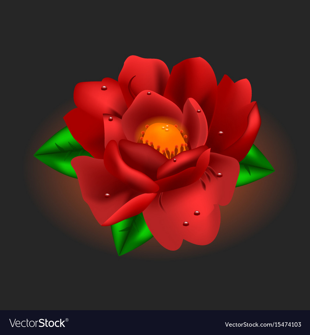 Beautiful flower red peony vector image
