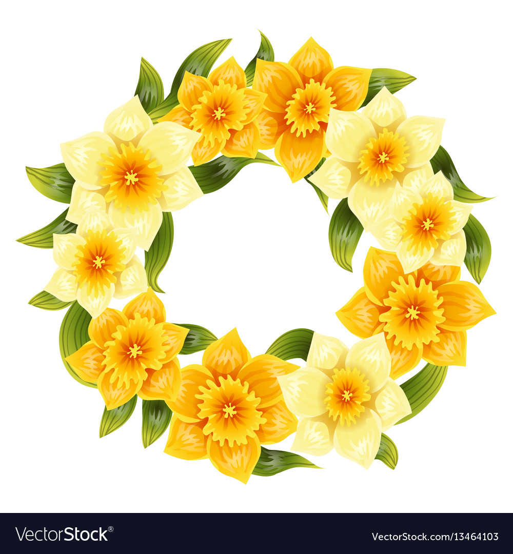 Elegant background with yellow daffodil narcissus