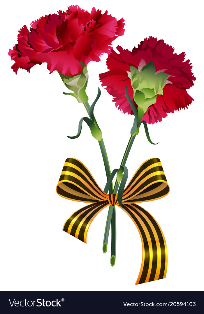 Red carnation flower bouquet and st george ribbon Vector Image