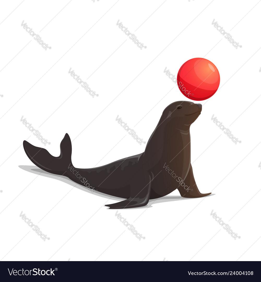 Circus seal balancing red ball isolated