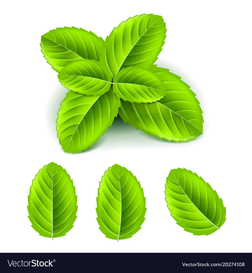 Mint leaves 3d photo realistic set