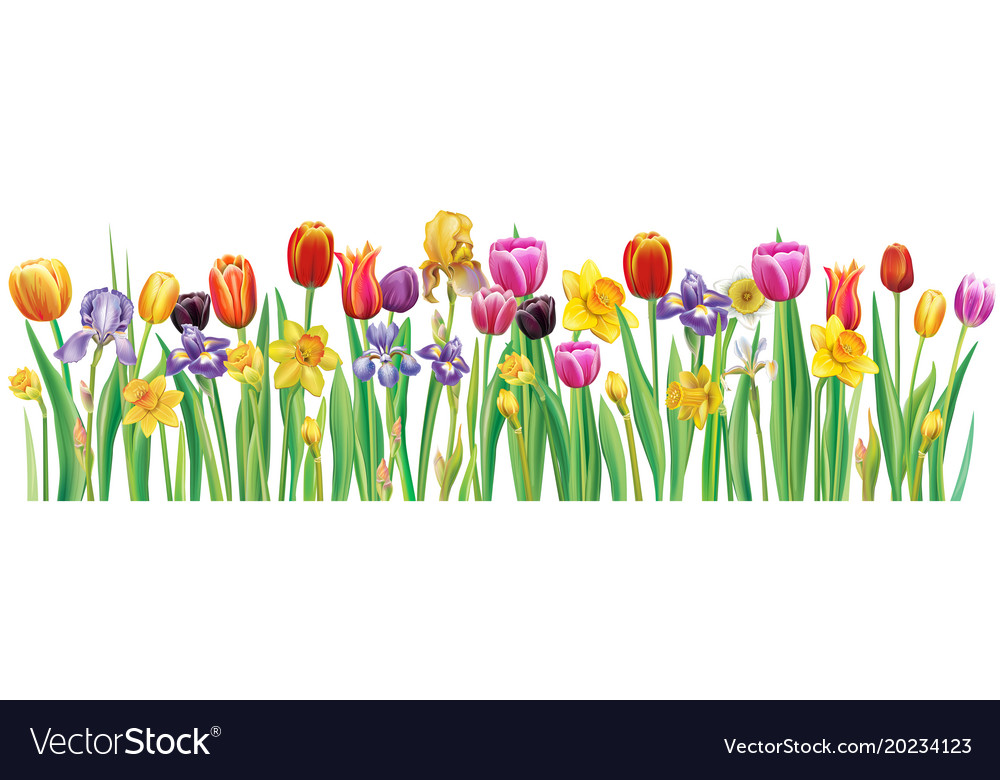 Border with multicolor spring flowers royalty free vector border with multicolor spring flowers vector image mightylinksfo