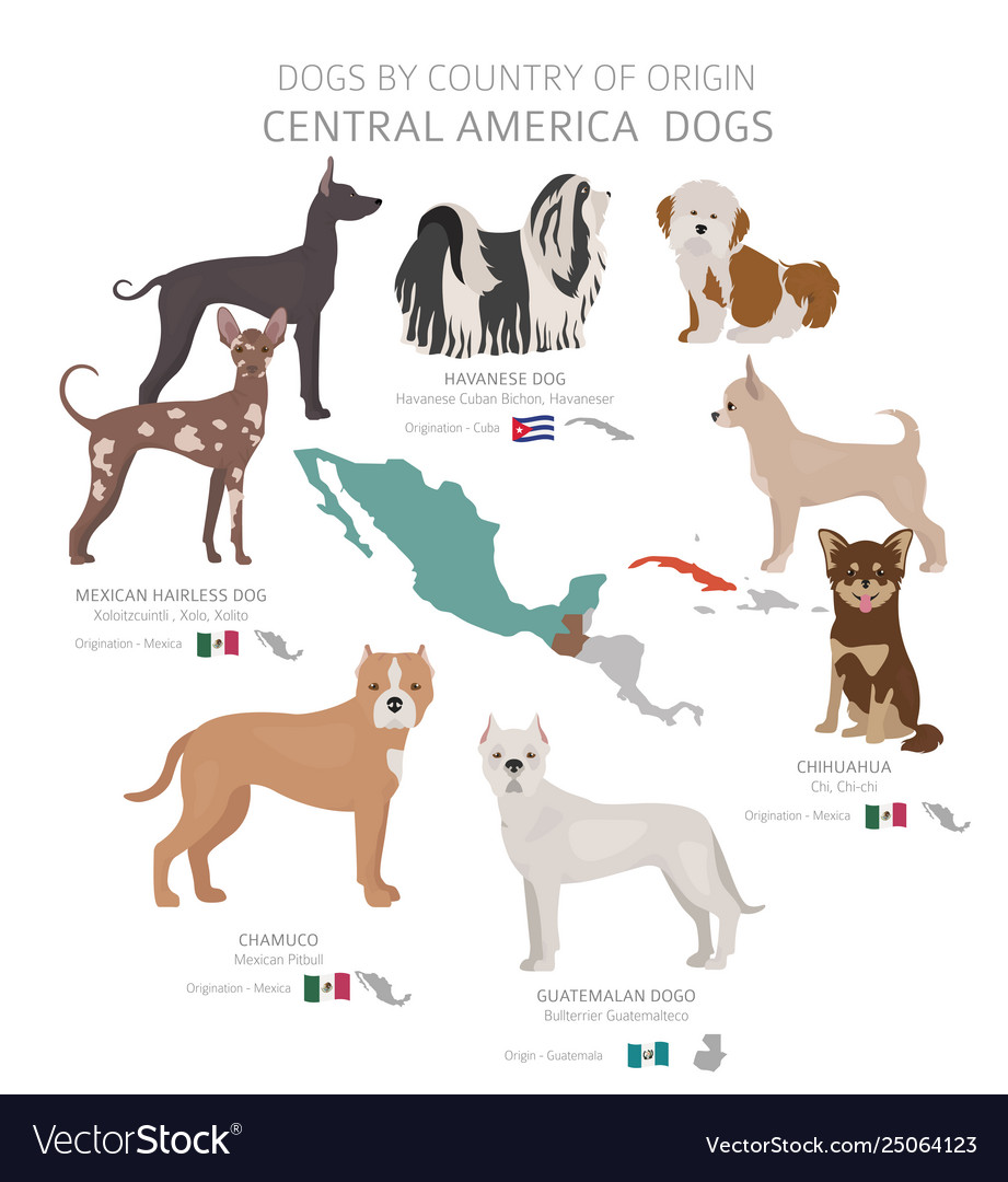Dogs country origin central american dog vector image