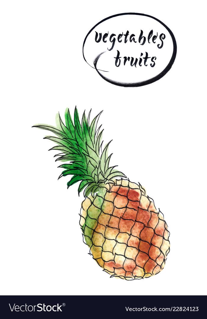 Fresh pineapple watercolor