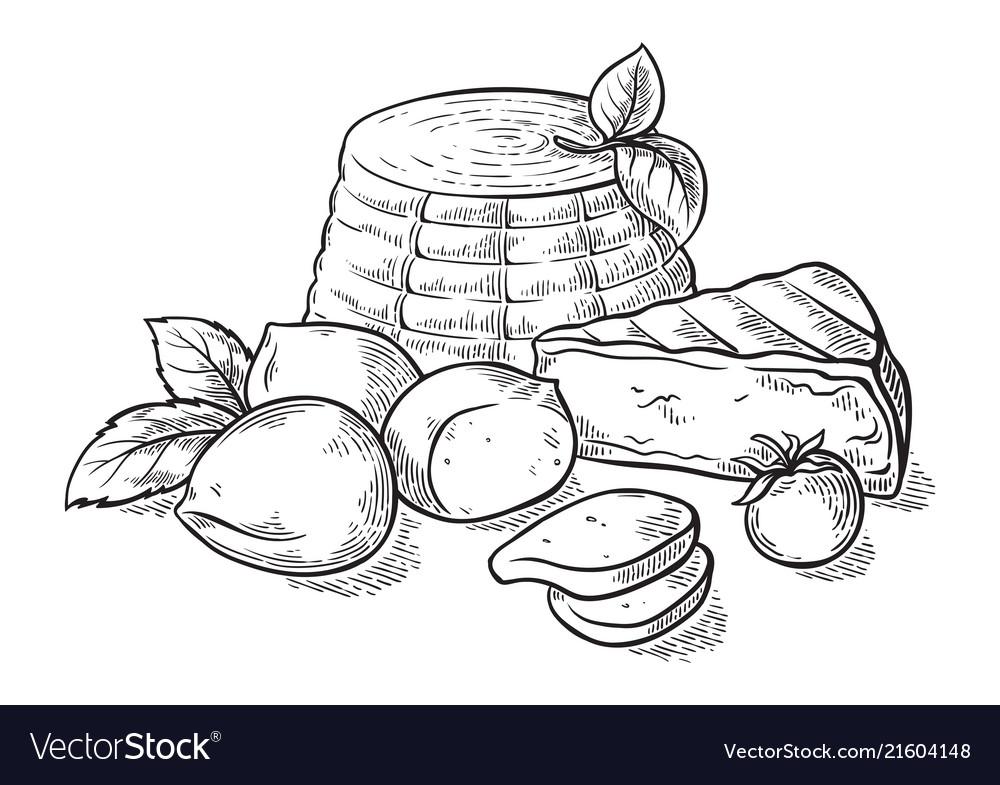 Cheese ricotta mozzarella hand drawn set engraving