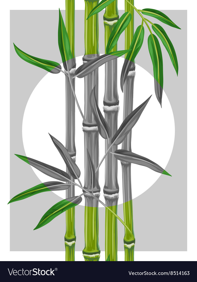 Poster With Bamboo Plants And Leaves Image For Vector Image