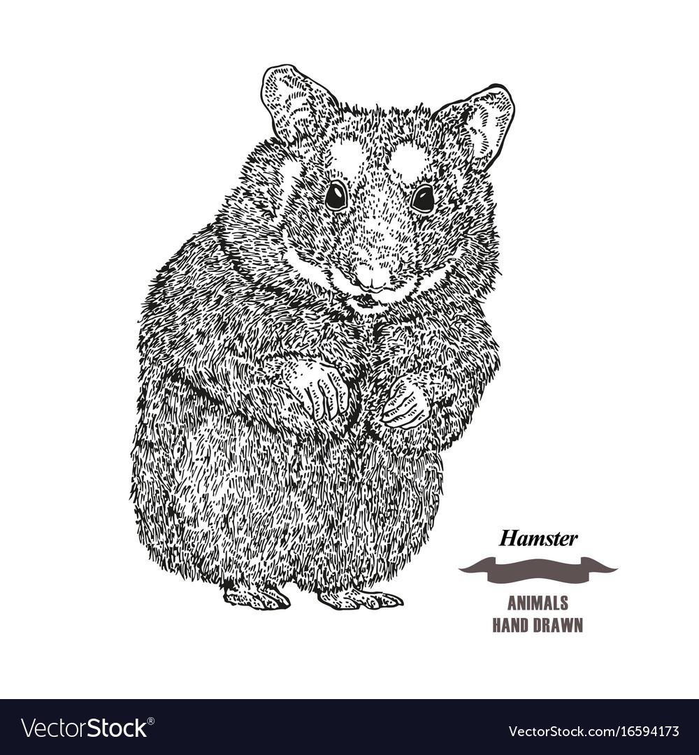 Hand drawn hamster black ink sketch animal on