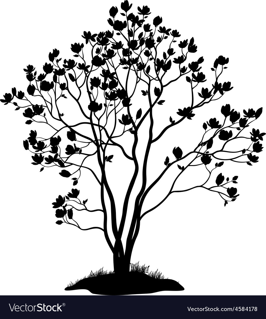 Magnolia Tree with Flowers and Grass Silhouette vector image