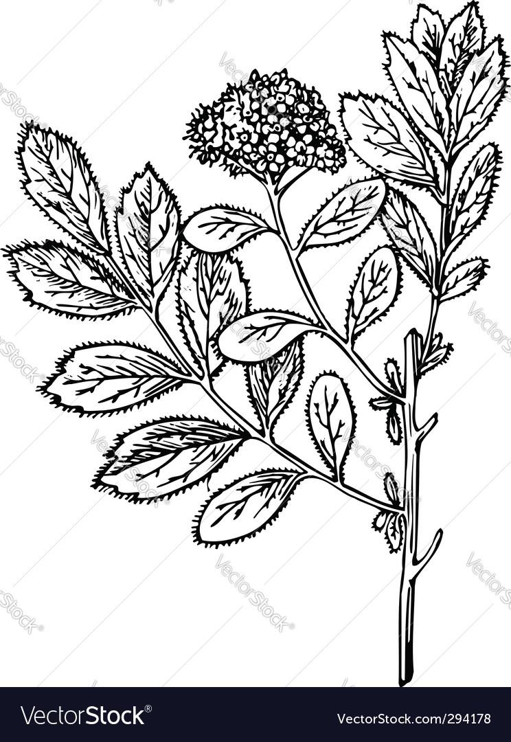 Plant spire vector image