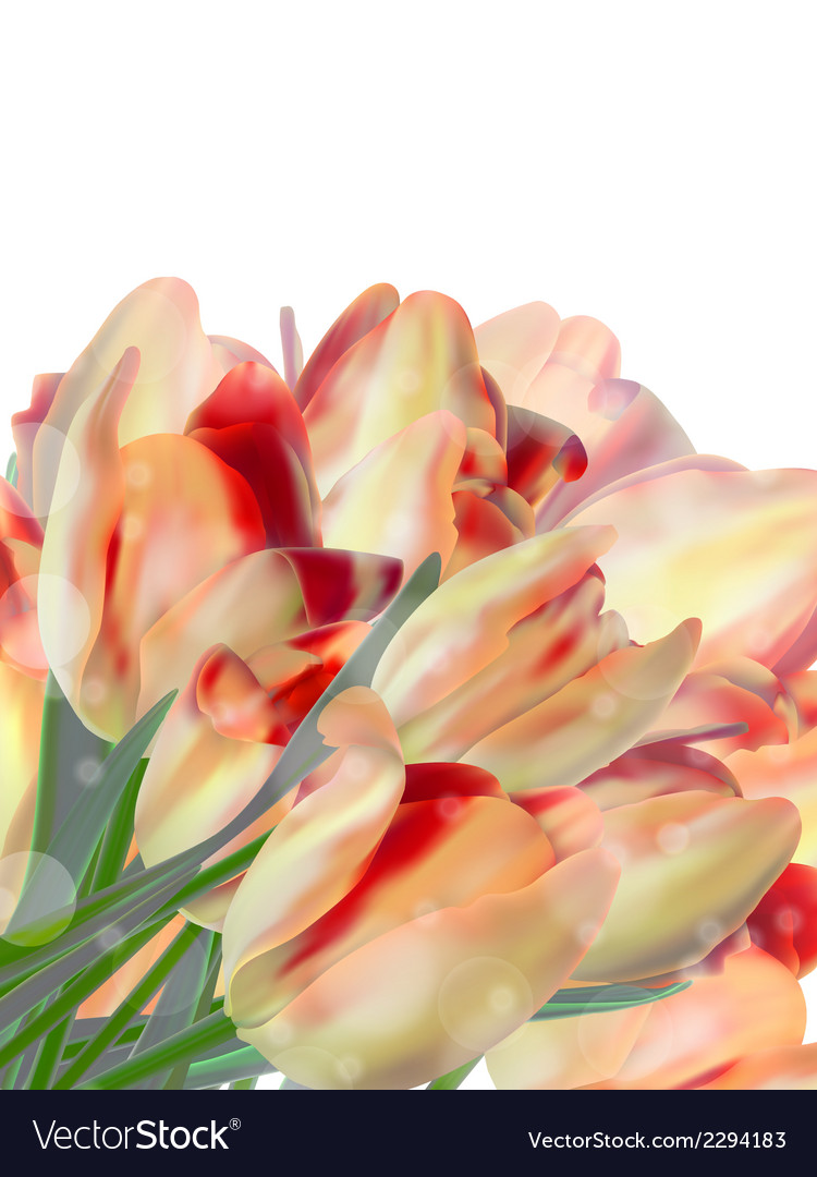 Bunch Of Beautiful Spring Flowers Eps 10 Vector Image