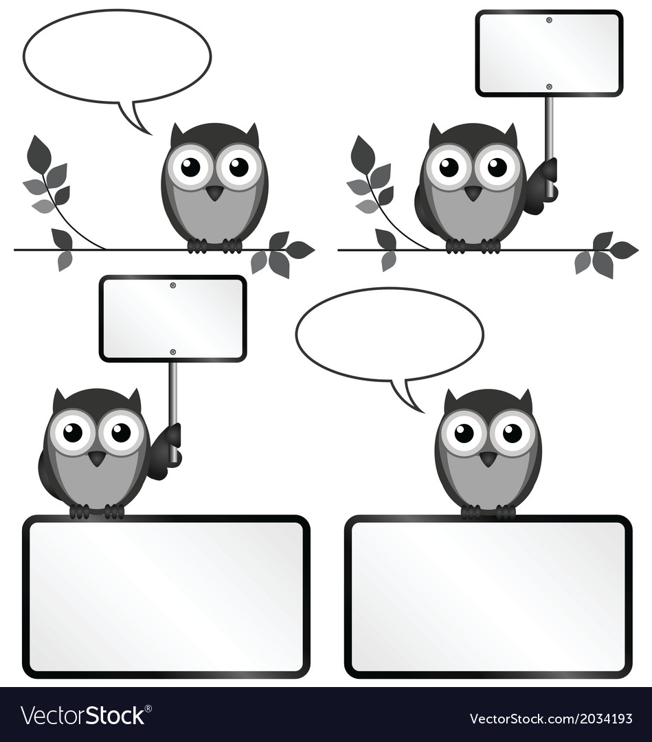 Owls with copy space