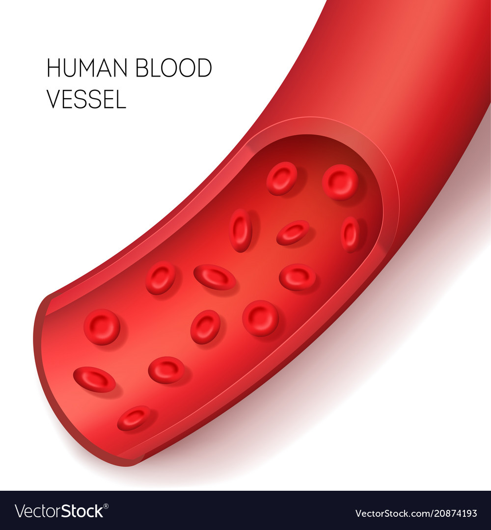 Realistic detailed 3d human blood vessel card