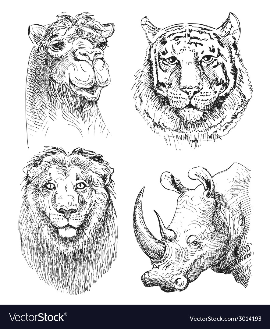 Set of safari head animals black and white sketch