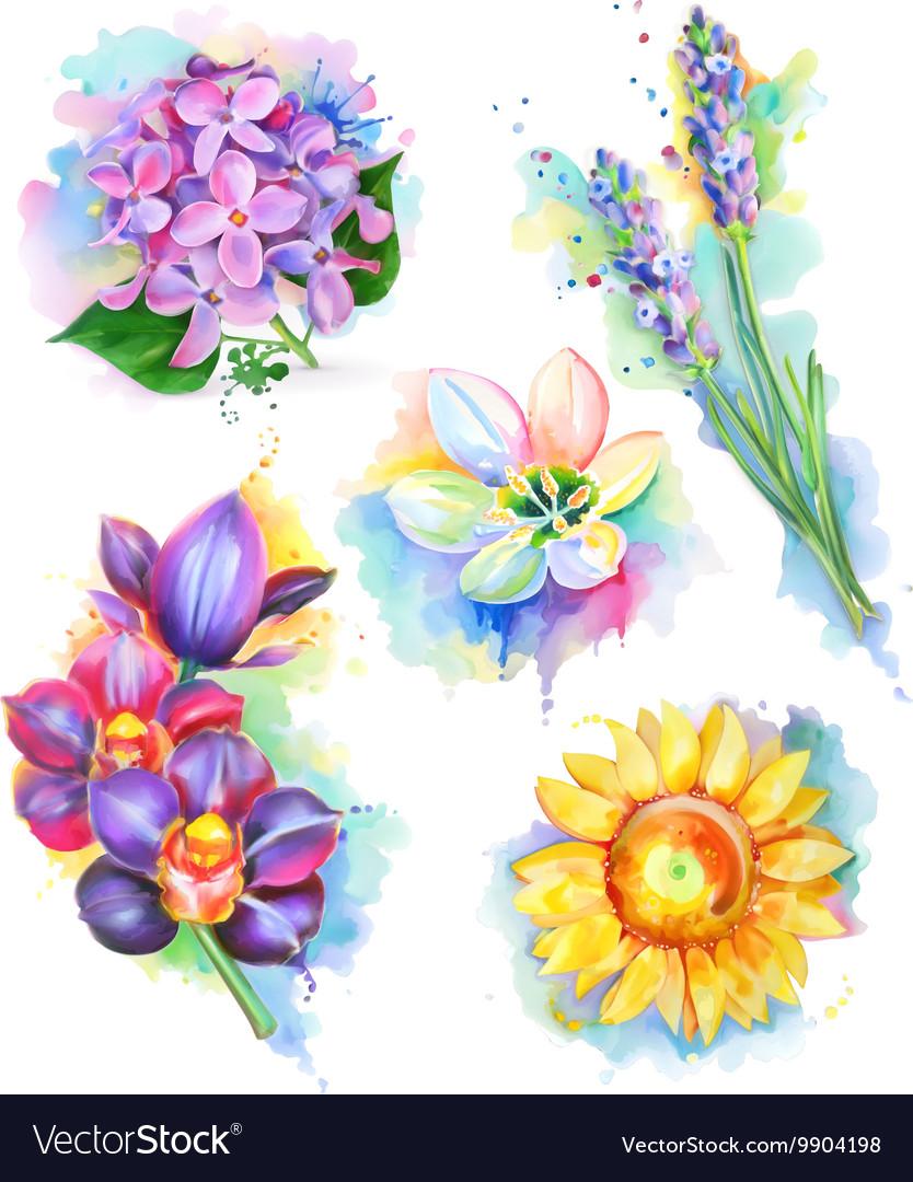 Beautiful flowers watercolor painting mesh icon vector image izmirmasajfo