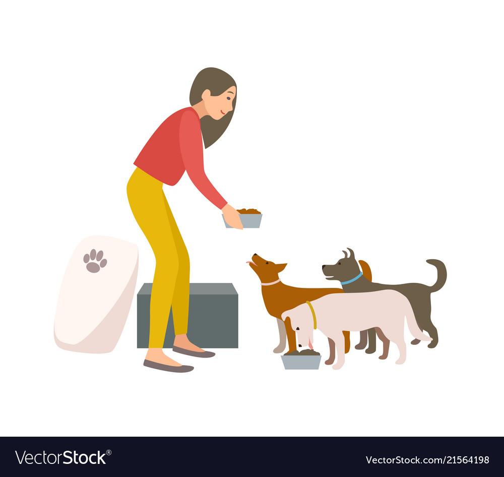 Friendly female volunteer feeding dogs in animal