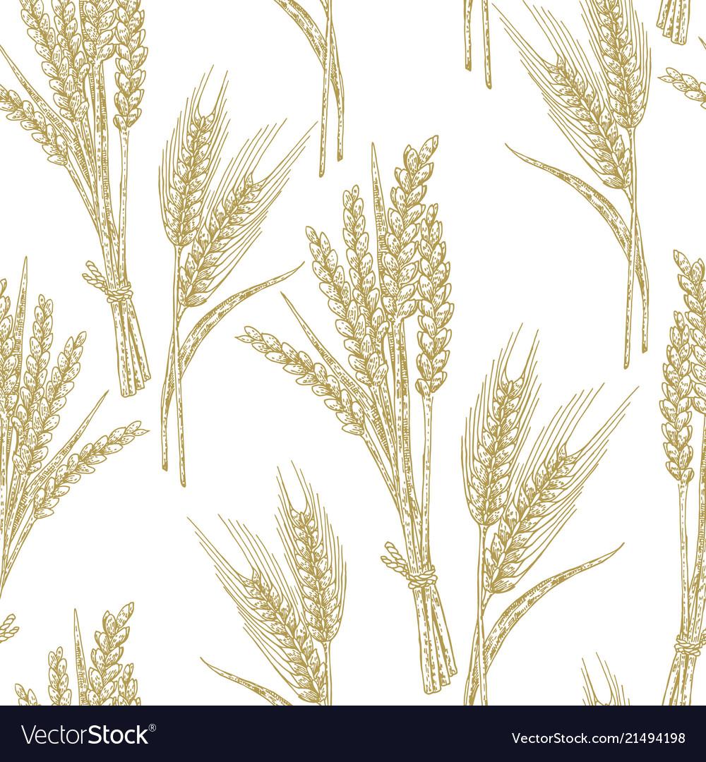 Wheat seamless pattern in sketch