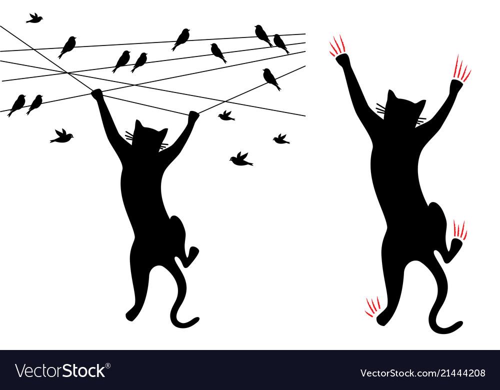 Black cat climbing birds on wire