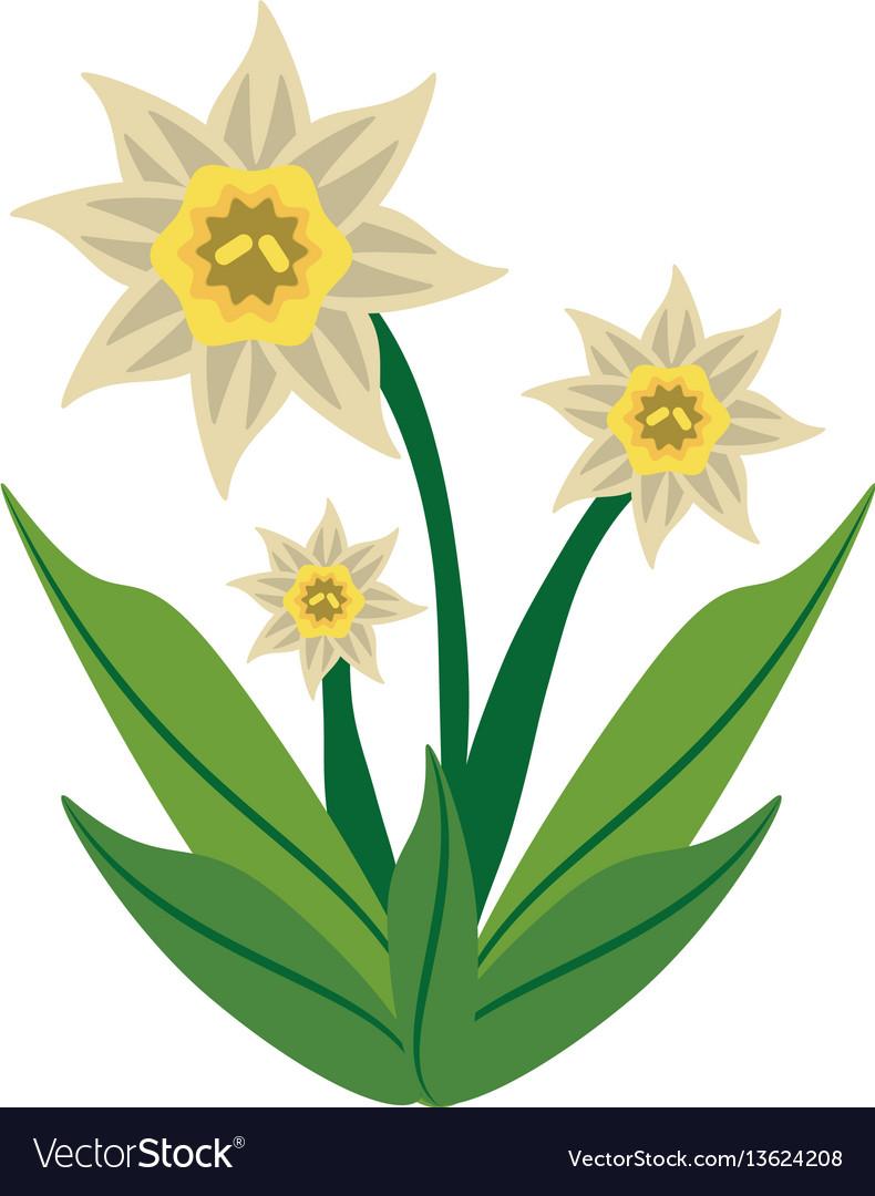 Daffodil flower spring image