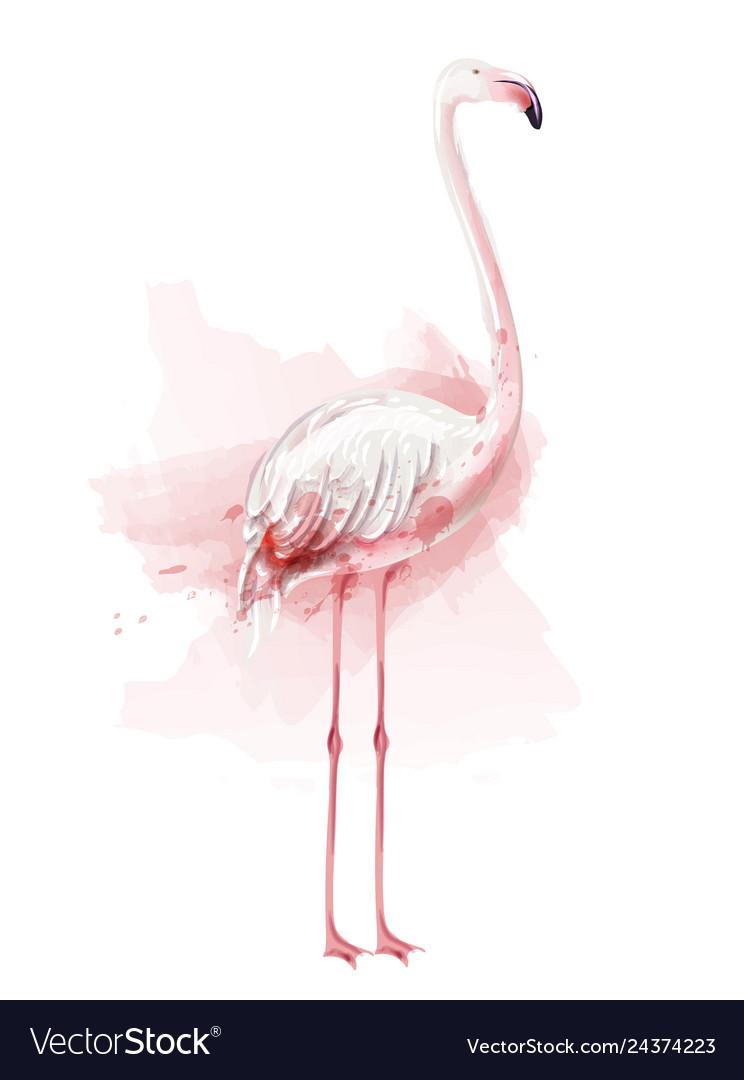 Flamingo watercolor pink bird isolated on