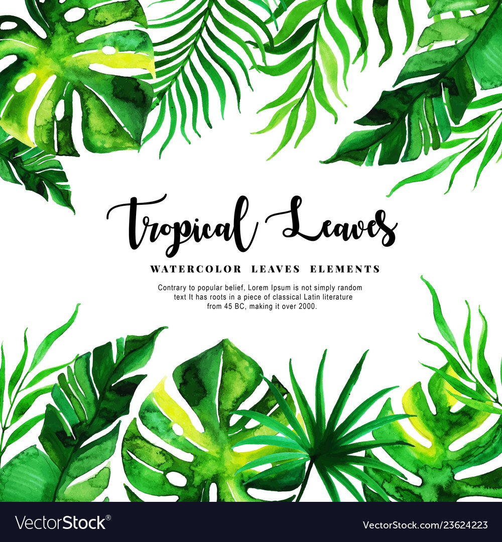 Watercolor Tropical Leaves Background Royalty Free Vector Each element was painted on watercolour paper.for creation of my watercolors i use only premium class products. vectorstock