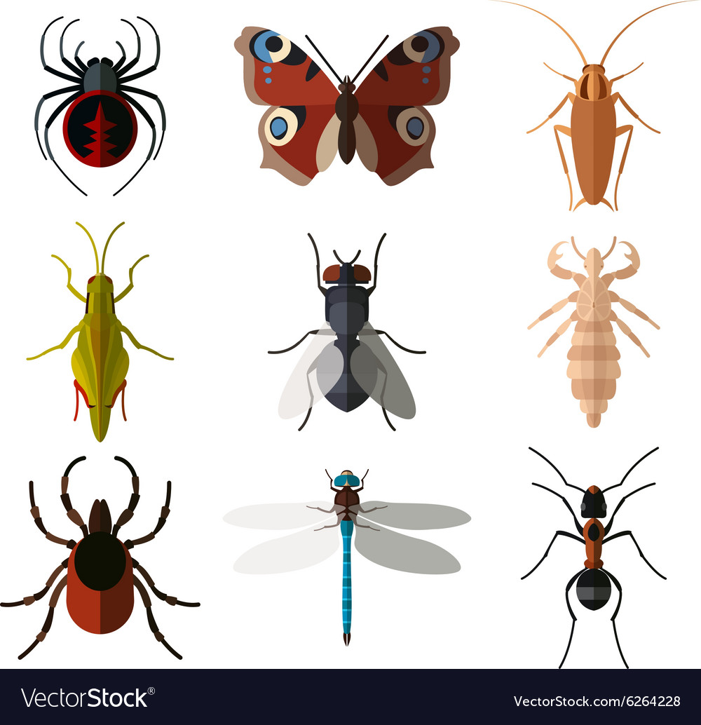 Set insect flat icons