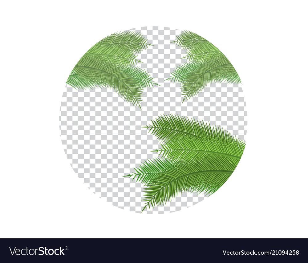 Palm leaf on transparent