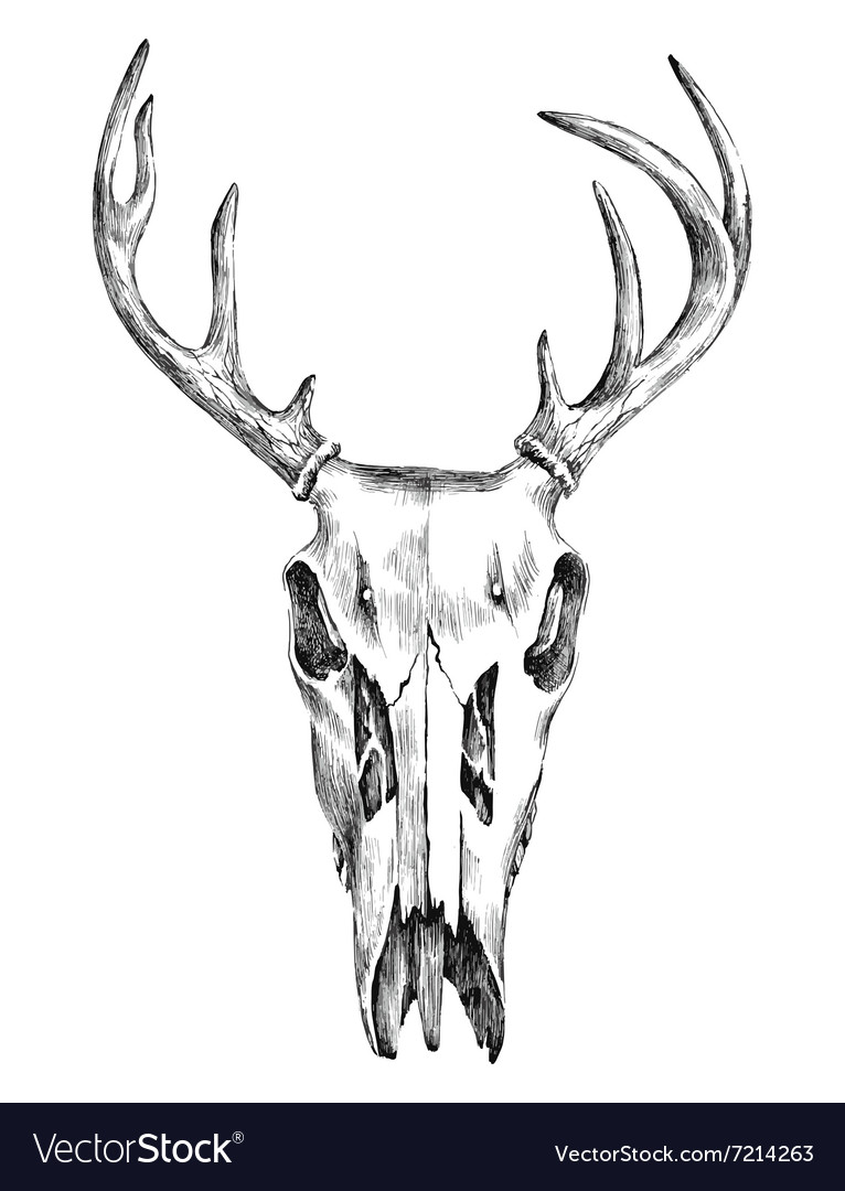 Hand drawn black and white deer scull vector image