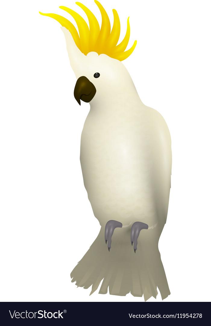Cockatoo alba bird Parrot character