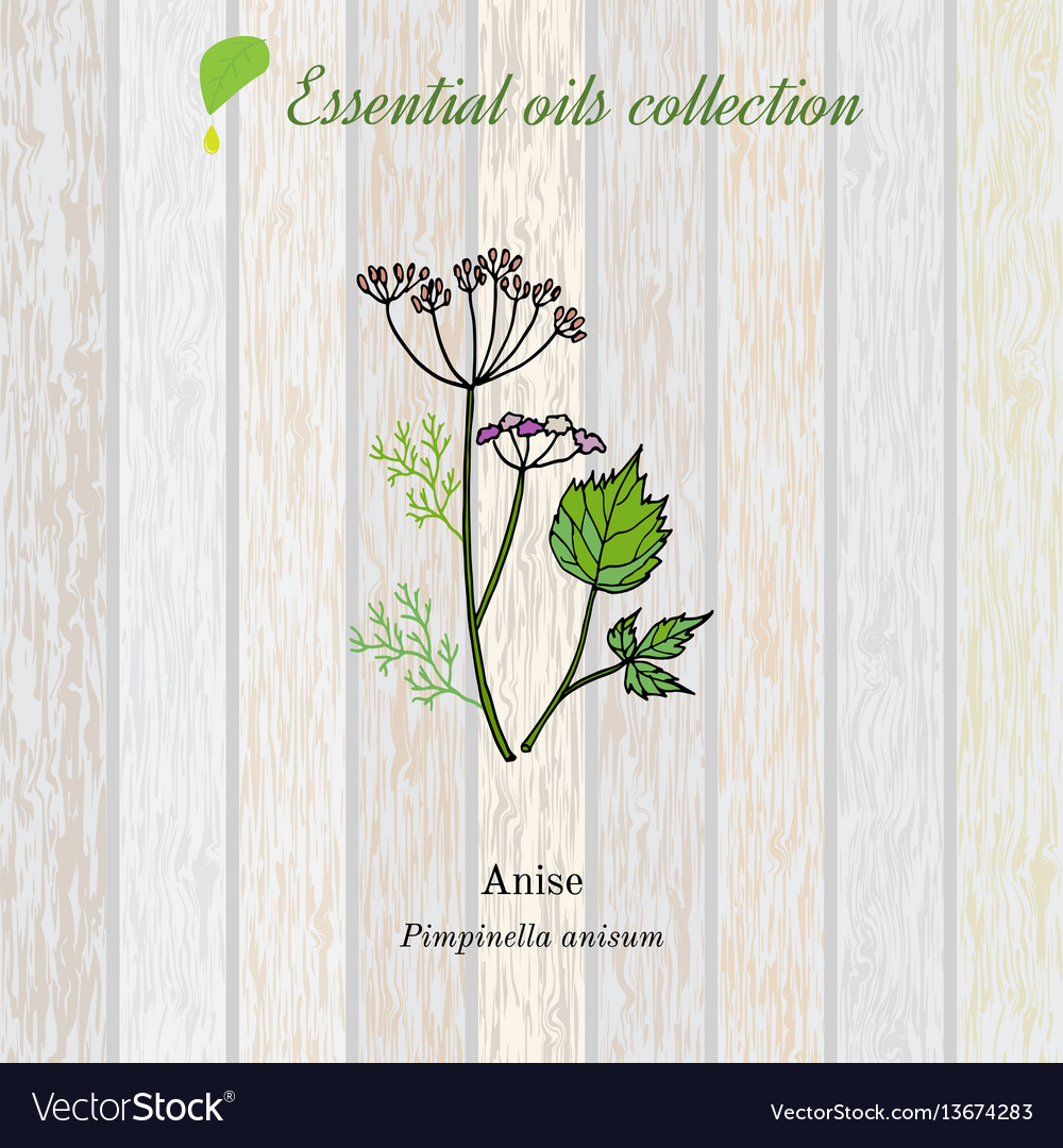 Anise essential oil label aromatic plant