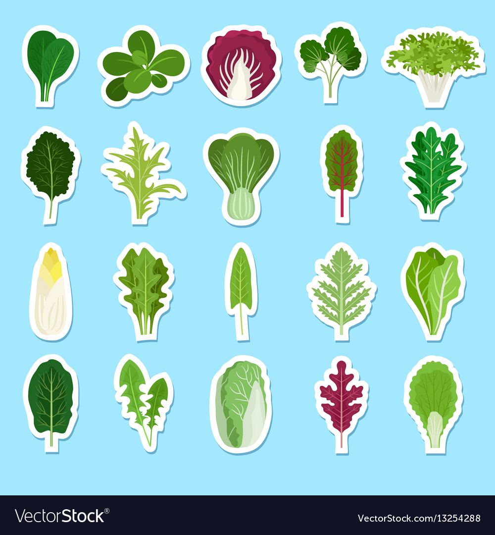 Cartoon green salad leaves stickers vector image