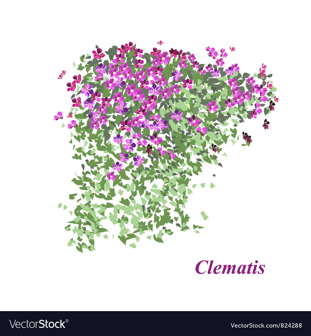 Flowering Vine Royalty Free Vector Image Vectorstock