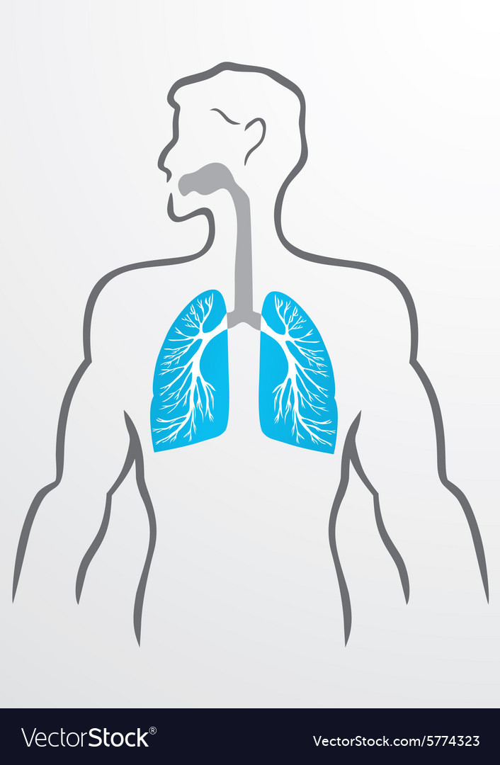 Lungs and human body Royalty Free Vector Image