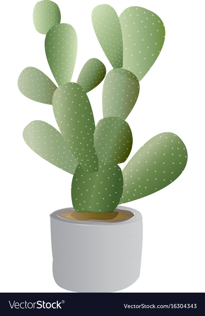 Cactus plant with pot