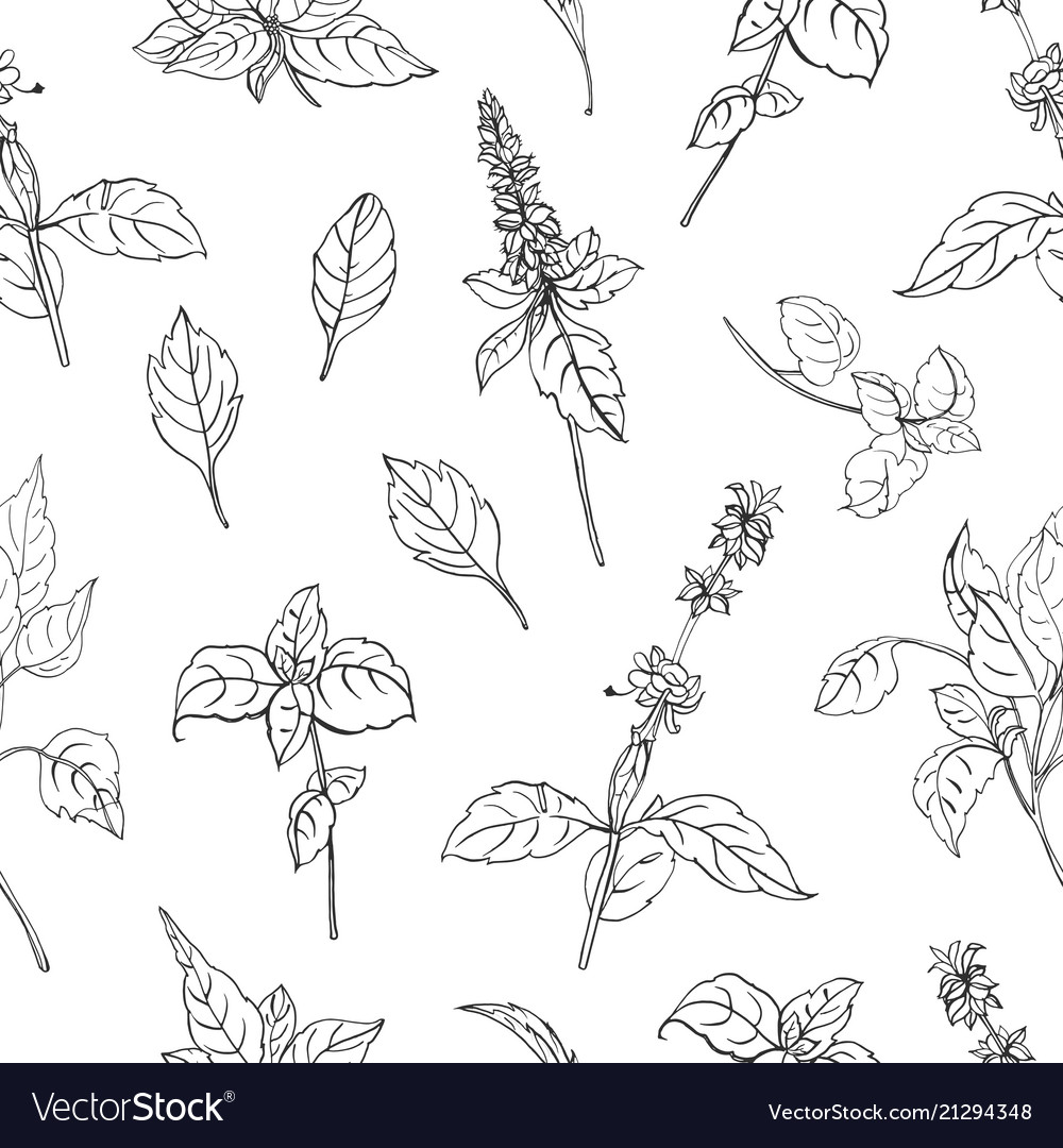 Natural seamless pattern with basil leaves and
