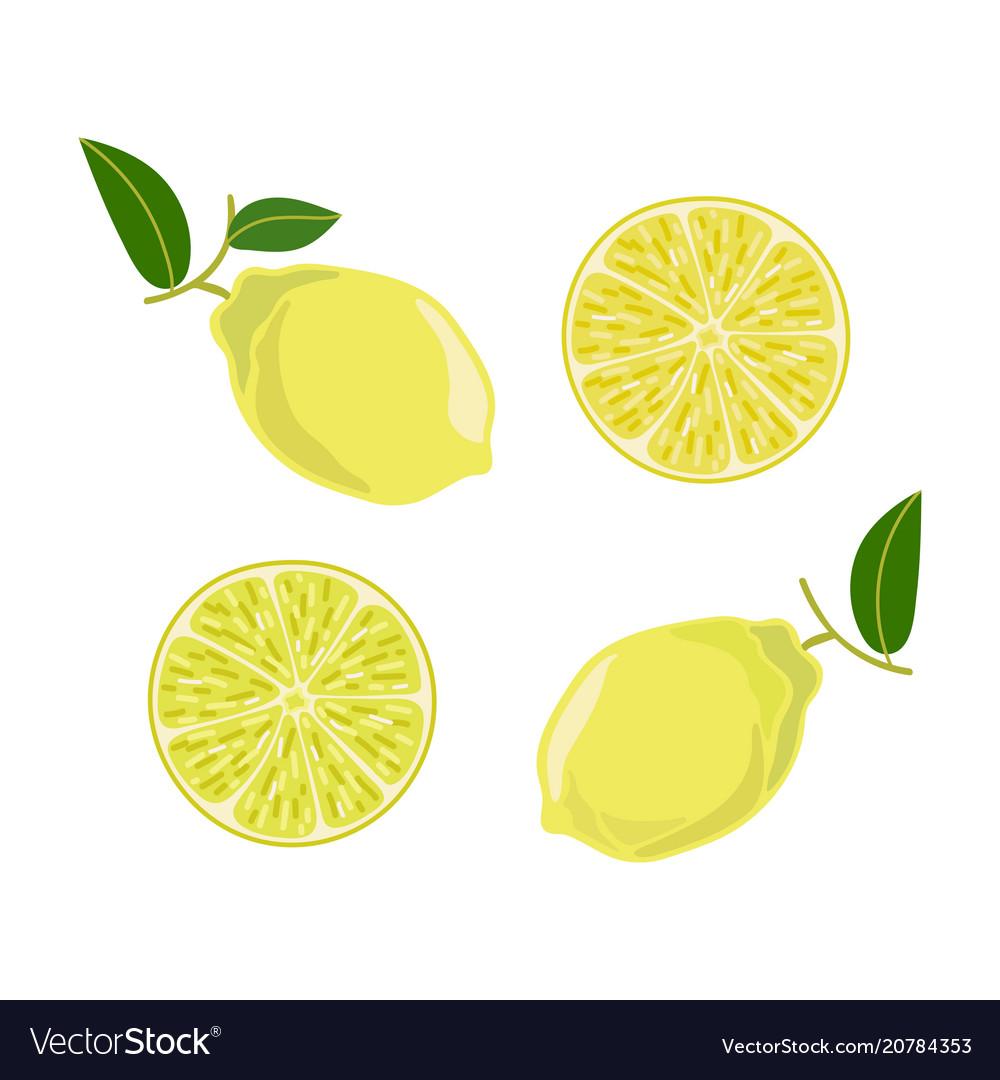 Lemon leaves branch set in cartoon style