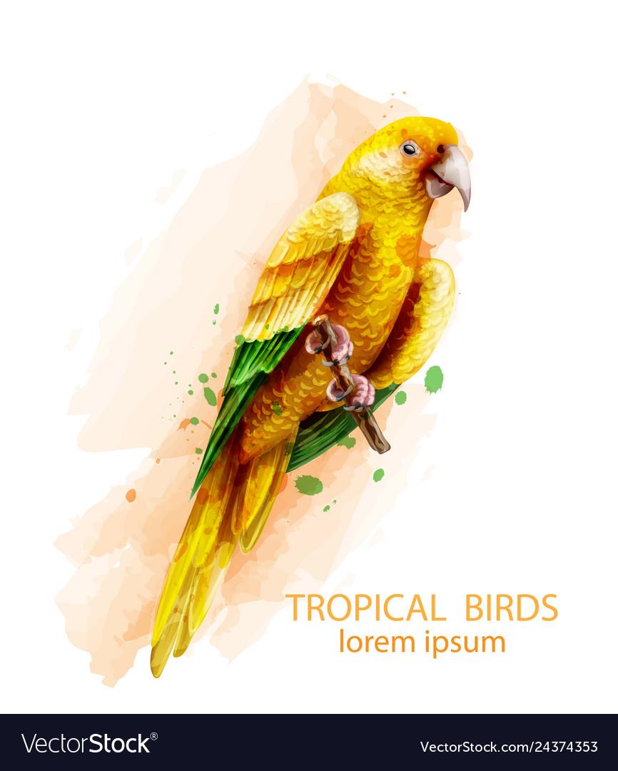 Tropic parrot yellow bird watercolor