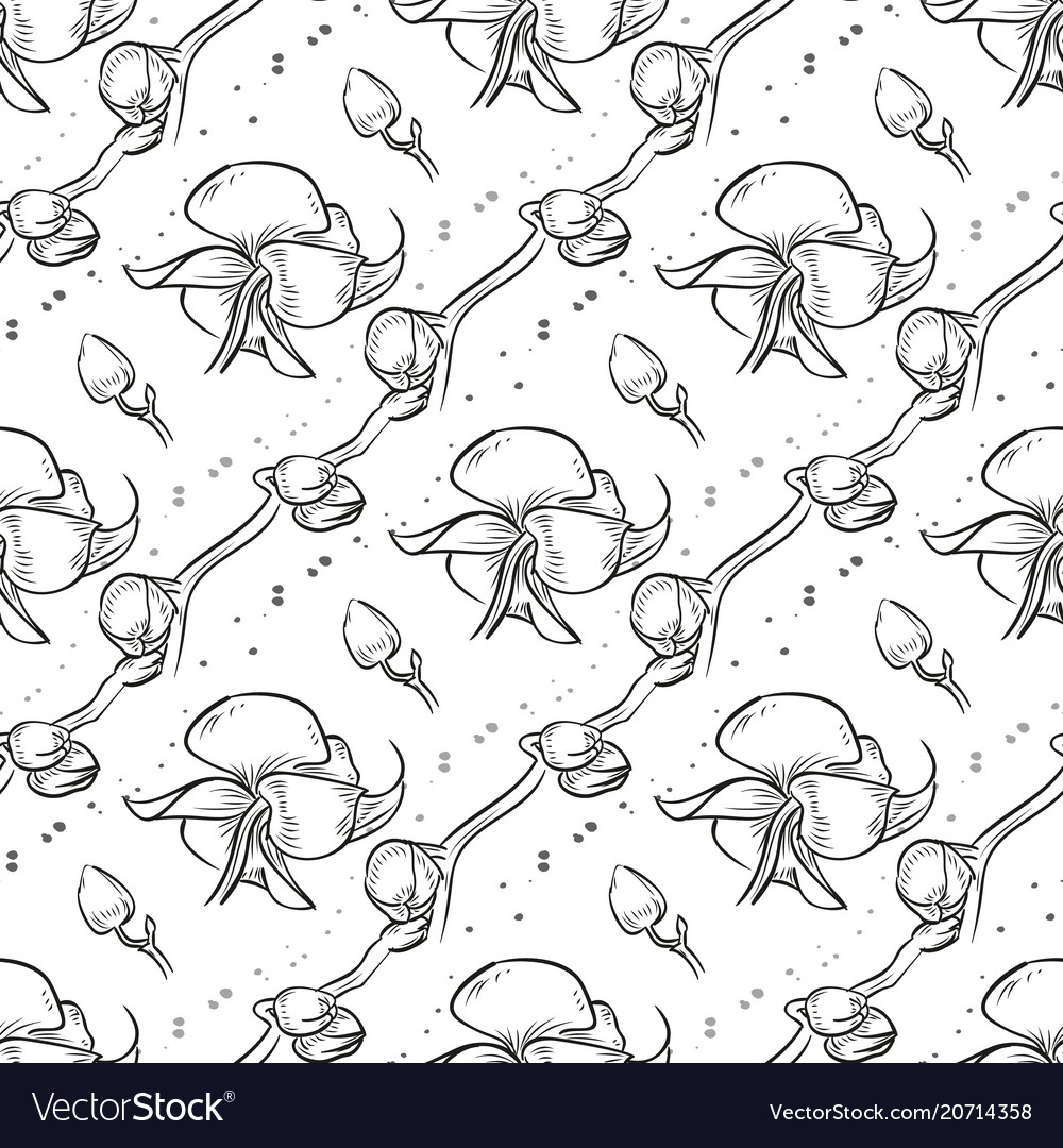 Hand drawn orchid seamless pattern vector image