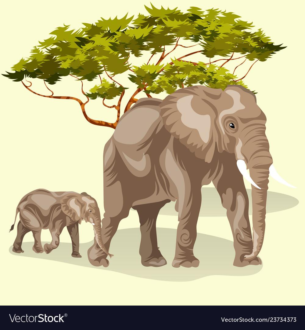 Cartoon family african elephants walking in