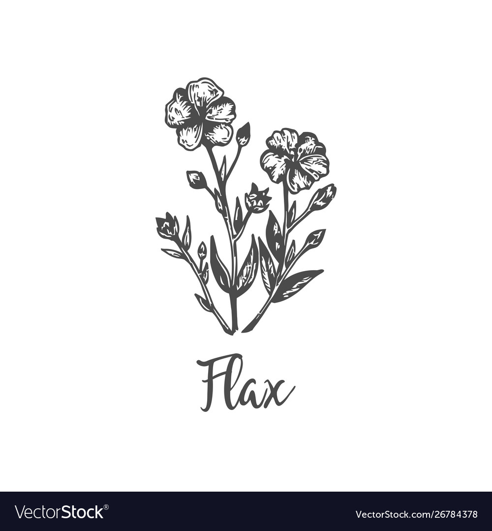 Flax hand drawn outline