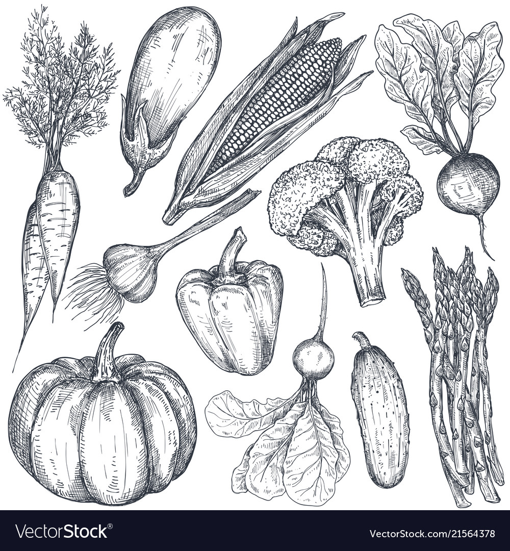 Set of hand drawn farm vegetables in sketch