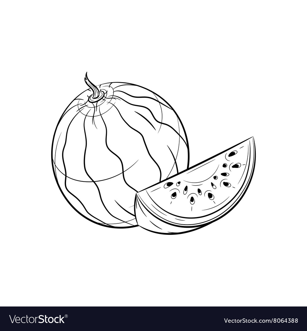 Hand drawn Watermelon sketches vector image