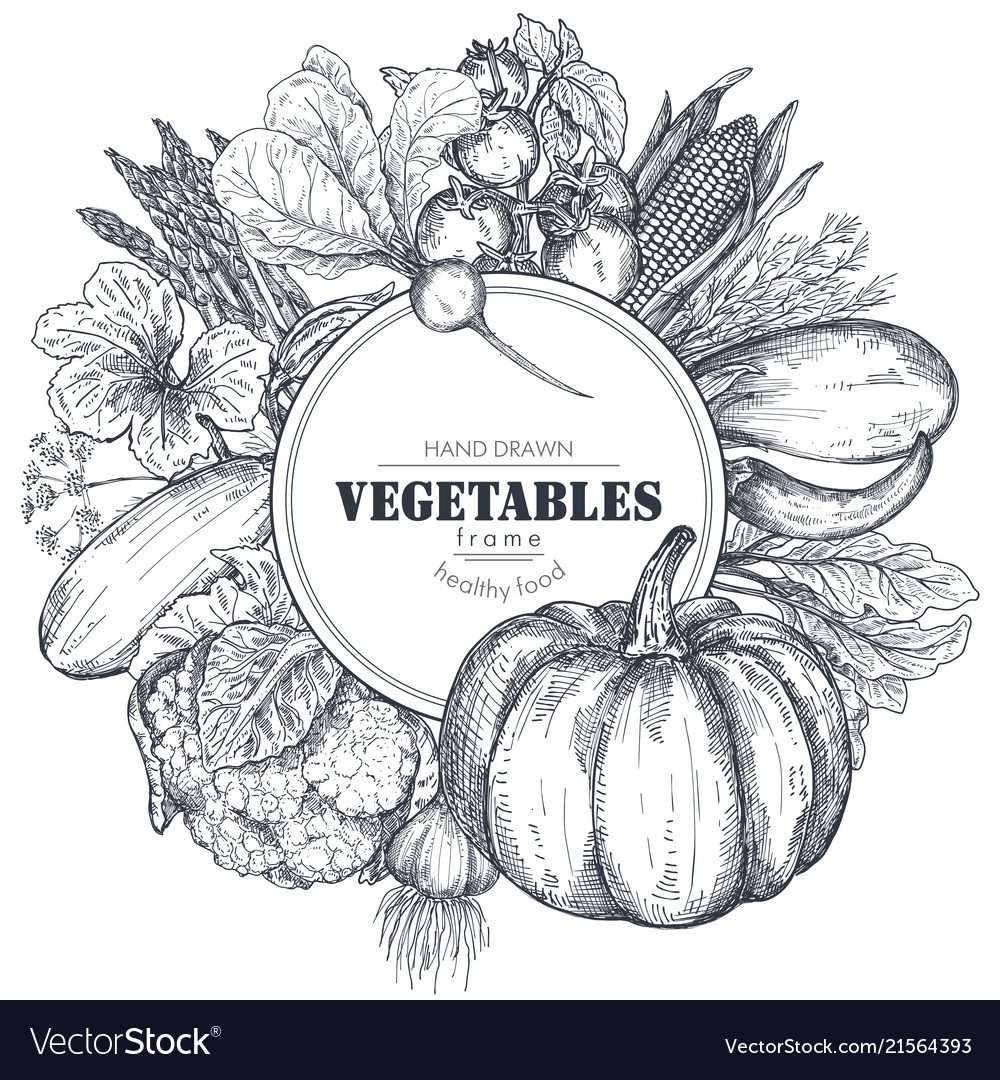Frame with hand drawn farm vegetables in Vector Image