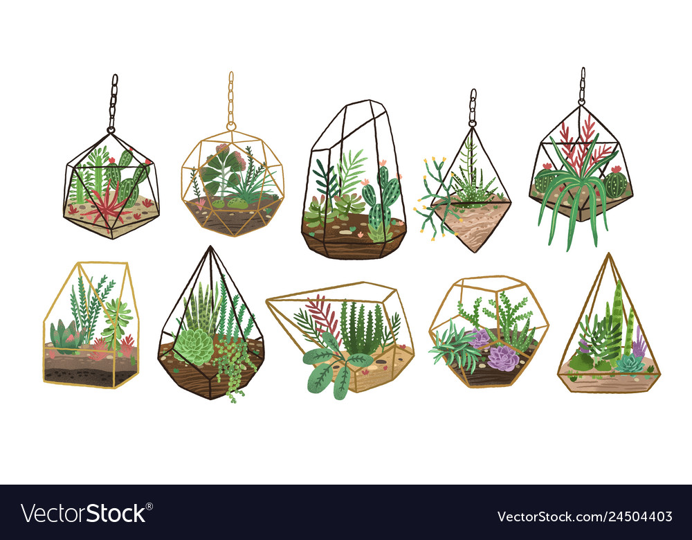 Collection succulents cactuses and other