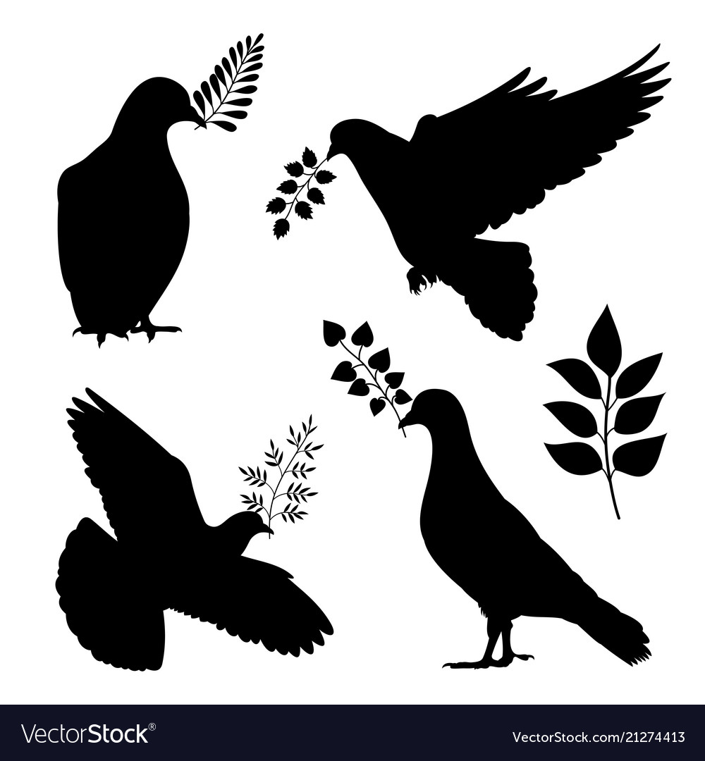 Dove peace silhouetes pigeon