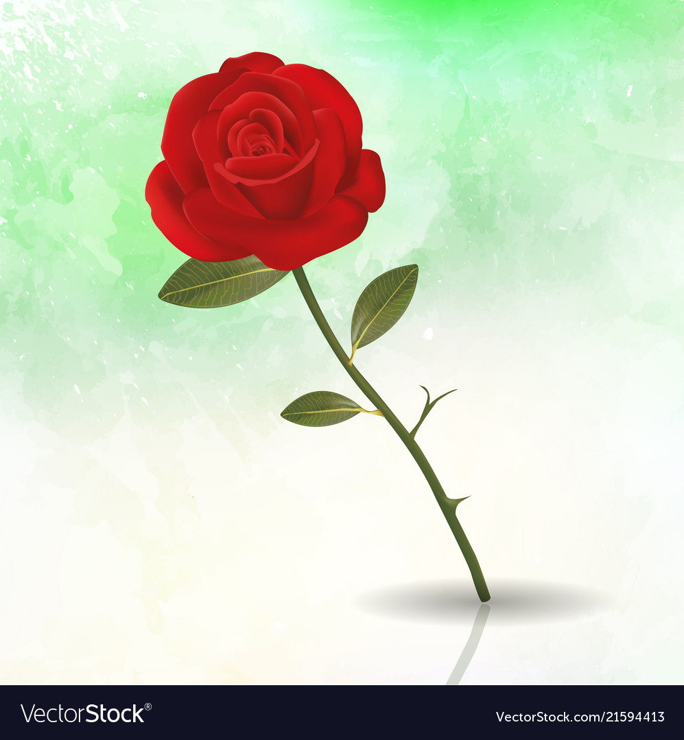 Rose floral flower romantic spring background