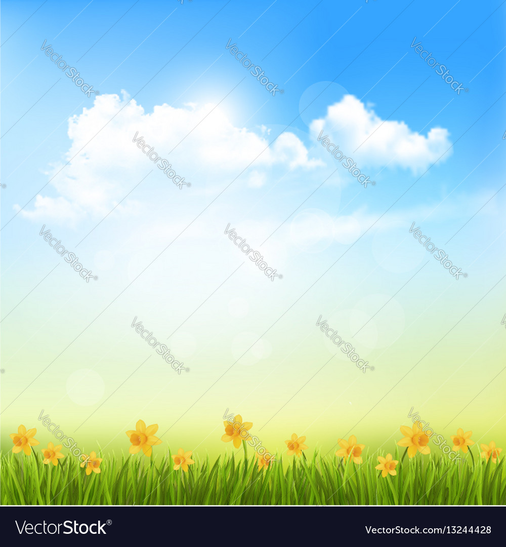 Spring nature background with a green grass and