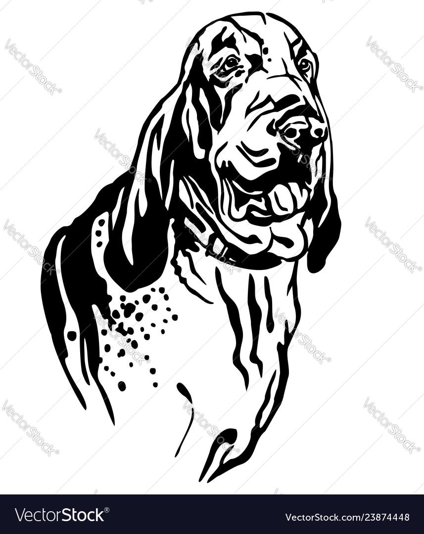 Decorative Portrait Dog Bracco Italiano Royalty Free Vector
