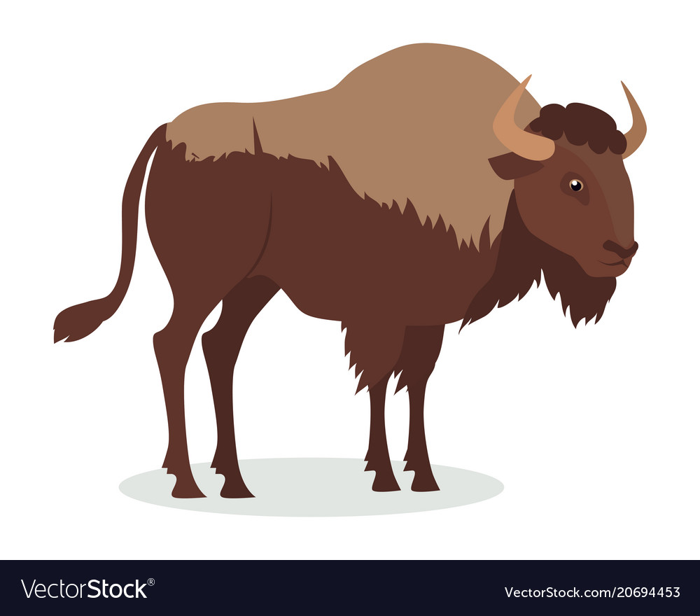 American bison cartoon icon in flat design