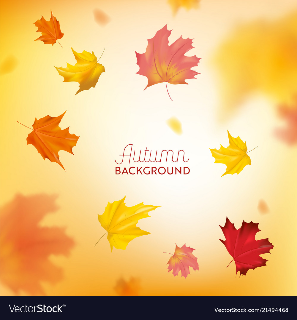 Autumn background with red and yellow maple leaves
