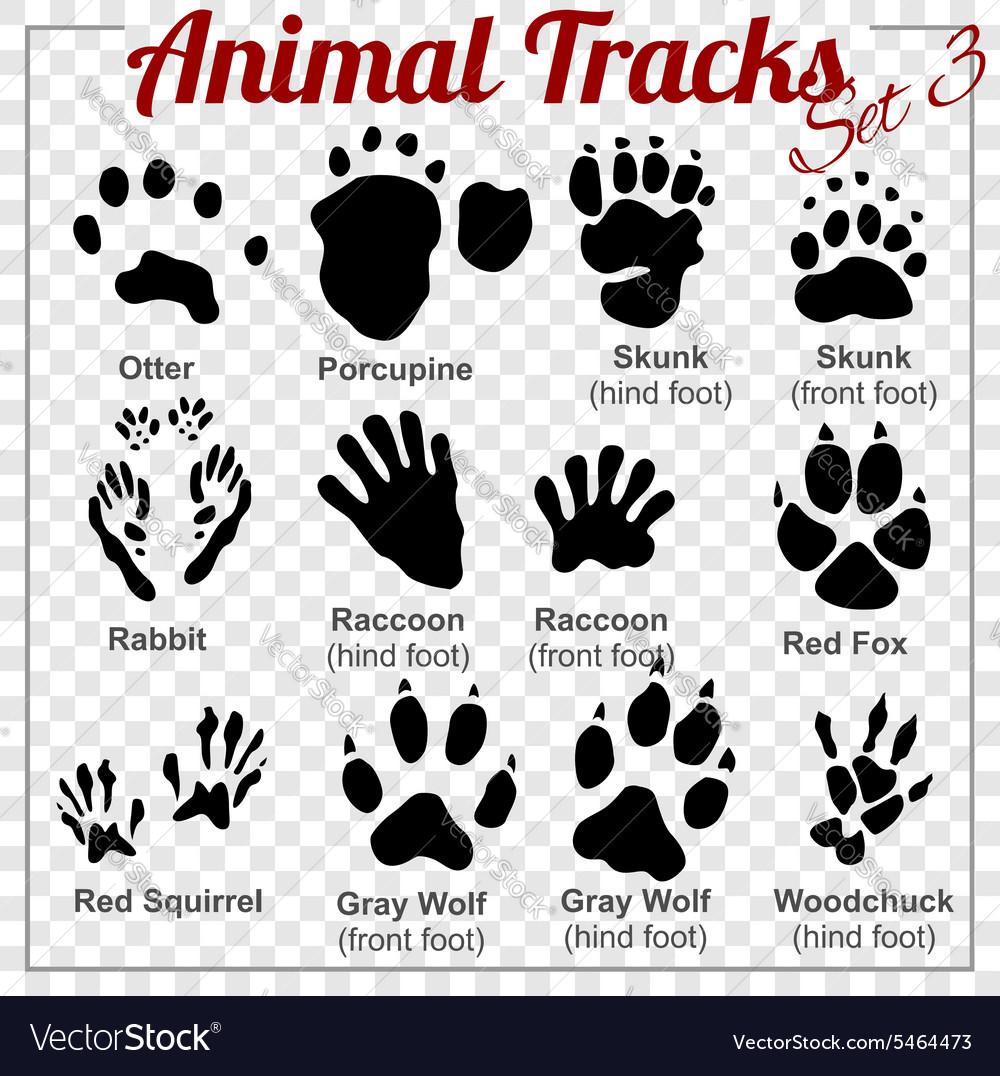 Animals Tracks - set vector image
